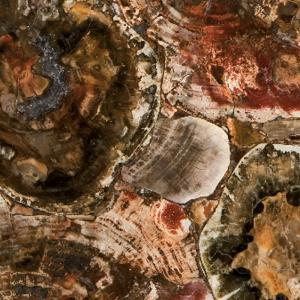 Caesarstone - 8330 Petrified Wood